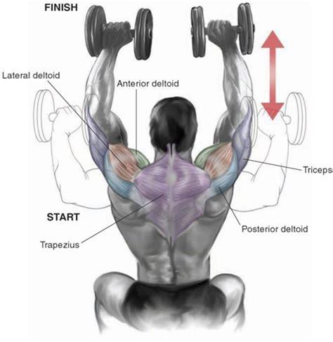 posterior shoulder pain bench press the 5 most effective shoulder dumbbell exercises