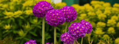 Beautiful Plants Southon Plants Of Dormansland Surrey Extraordinary Nursery