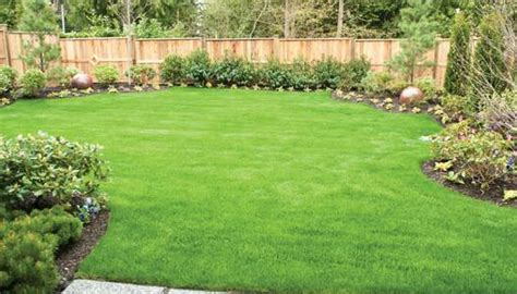 How To Clean Your Backyard Experts In Denver Landscaping And Design Yards Amp Gardens