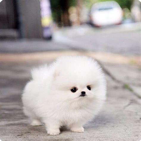 marshmallow puppy marshmallow d animals