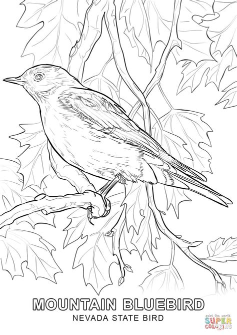 Nevada Search Nevada State Bird Coloring Page Free Printable Coloring Pages