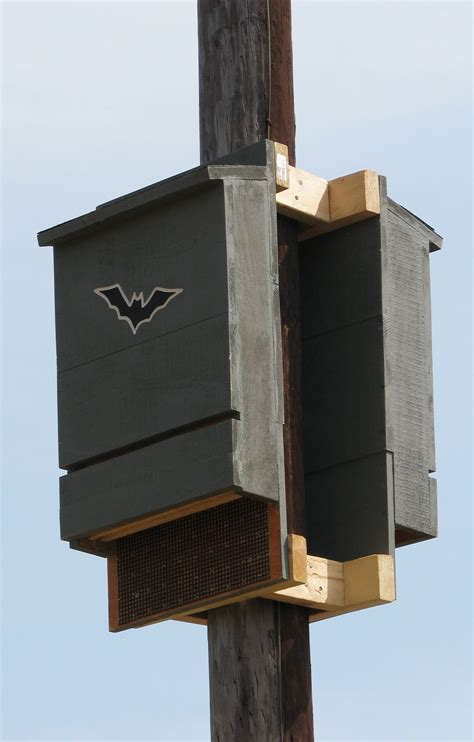 bat house placement bat box with roosting space inside images frompo