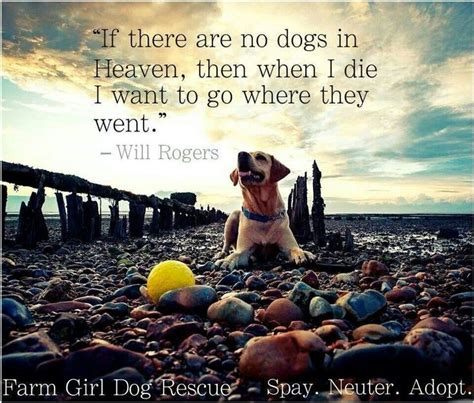 No More Dying Then if there are no dogs on heaven then when i die i want to go where they went will rogers