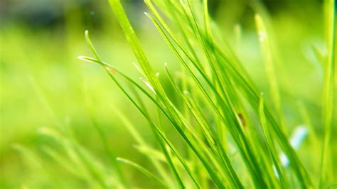 green hd wallpaper best fresh background image use lives plant backgrounds wallpaper 736439