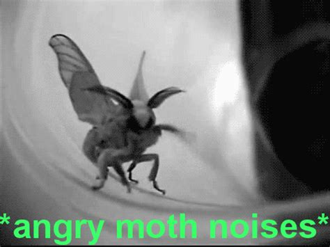 Moth Meme - funny animal gifs part 121 10 gifs amazing creatures
