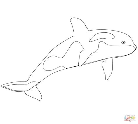 killer whale or orca coloring page free printable