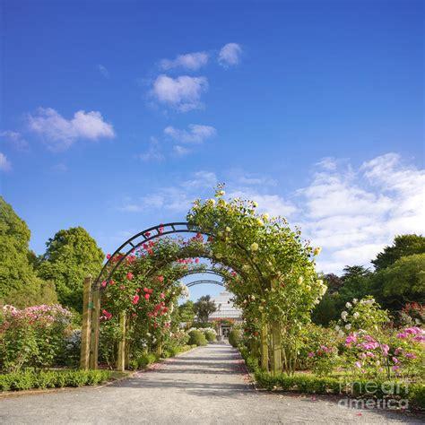 Garden Christchurch Nz New Zealand Christchurch Hagley Park Garden Summer