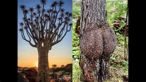 Trees From Around The World by Shaped Trees From Around The World