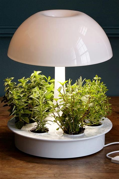 stylish indoor flower pots affordable indoor pots