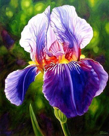 fiori rari nomi oltre 25 fantastiche idee su fiori rari su