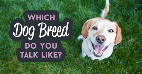 which breed are you which breed do you talk like quiz quizony