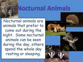 nocturnal animals power point presentation fsks1 by