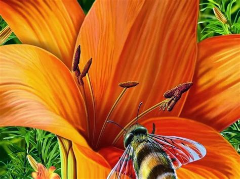 beautiful orange beautiful orange flower beautiful desktop wallpapers 2014