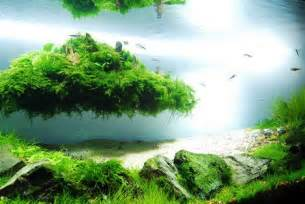beautiful aquascaping photo collection quertime
