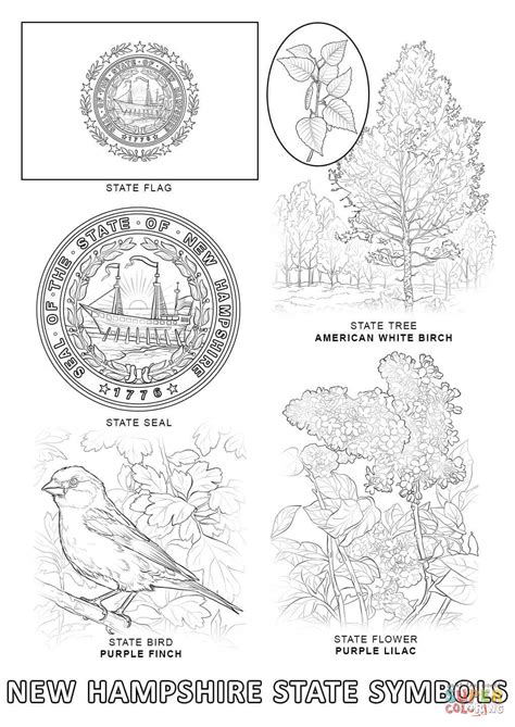 pams50states nj state symbols new jersey state flower coloring page archives kids