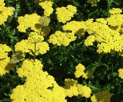types of garden plants and flowers 25 types of flowers to plant for summer summer flowers