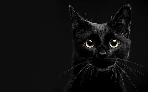 wallpaper cat black and white top downloaded wallpapers hd desktop backgrounds