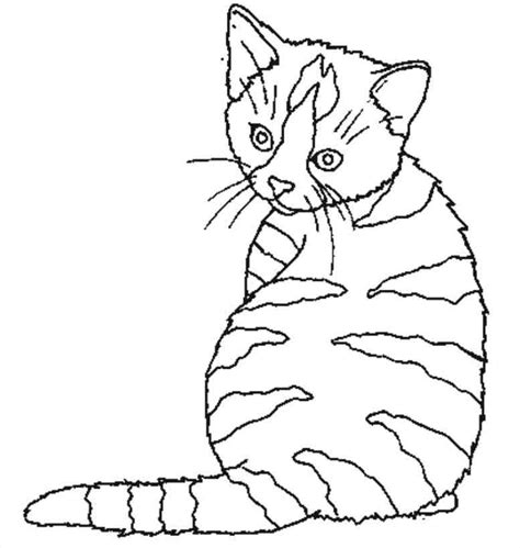 coloriage de chaton a imprimer az coloriage chaton 44 animaux coloriages 224 imprimer