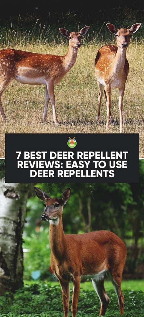 Deer Repellent For Gardens by 25 Best Ideas About Deer Repellant On Deer