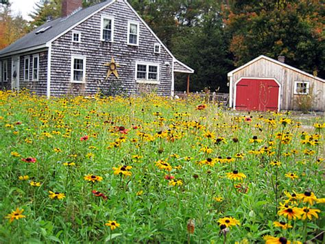 growing wildflowers in backyard replace your lawn with what