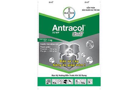 Antracol 1kg antracol 70wp thuốc trị nấm bệnh cho c 194 y trồng thuốc trừ s 226 u sinh học thuốc trừ nấm thuốc