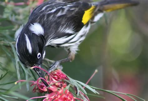 how birds visual perception influences flower evolution