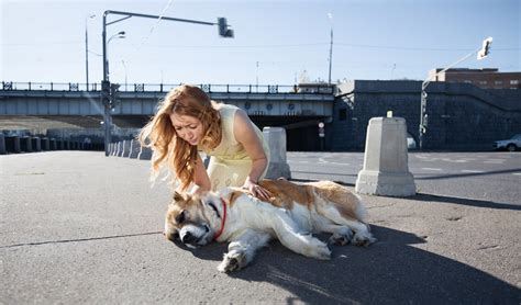 strokes in dogs 8 steps to preventing and treating heat stroke in dogs couture country