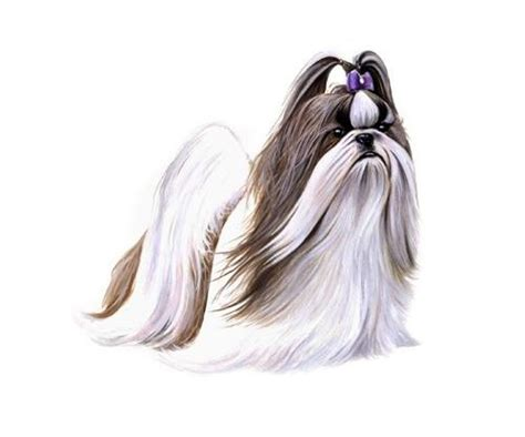 what is the average weight of a shih tzu shih tzu wisdom panel