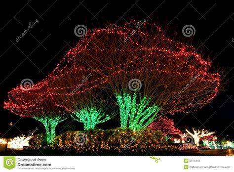 lighted christmas tree with others 75000 christmas lights