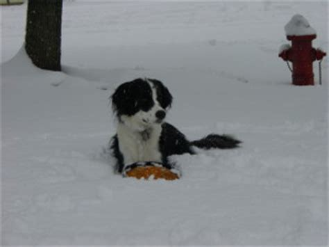 hypothermia in dogs signs of hypothermia in dogs
