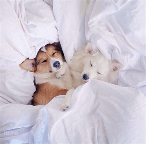 animal in bed adorable animals bed bedroom cozy cuddle cute dog