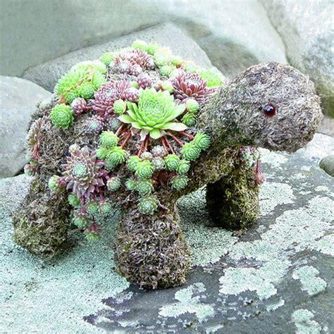 turtle succulent planter 17 best images about diy on pinterest knots men s dress