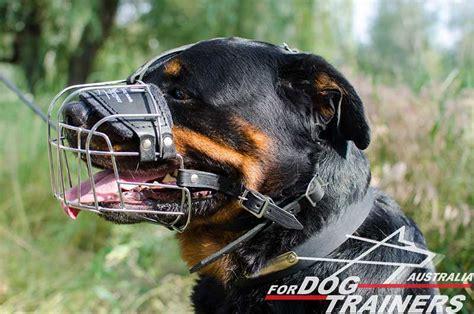 rottweiler muzzle purchase wire basket muzzle walking muzzles australia