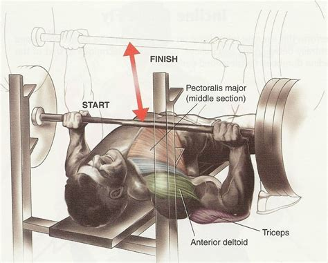 bench press routine for mass barbell bench press chest exercises pinterest
