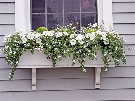 window boxes for plants 25 best ideas about winter window boxes on