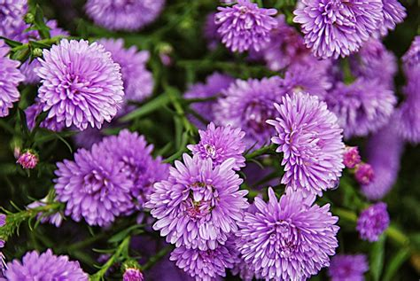 fiori di settembre fiori e piante di settembre i lavori da fare in questo