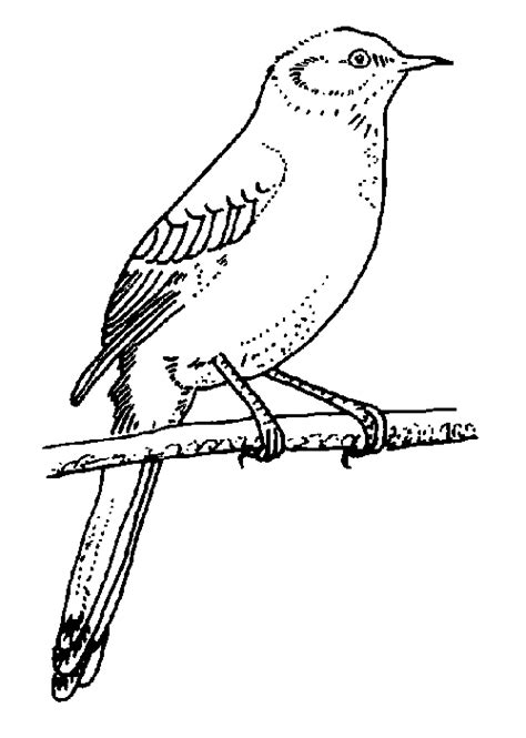texas bird coloring page tpwd kids texas symbols mockingbird