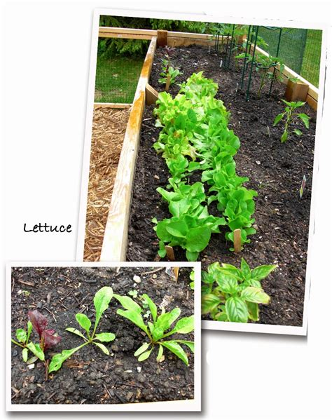 year vegetable gardening the one vegetable you must grow this year the impatient gardener