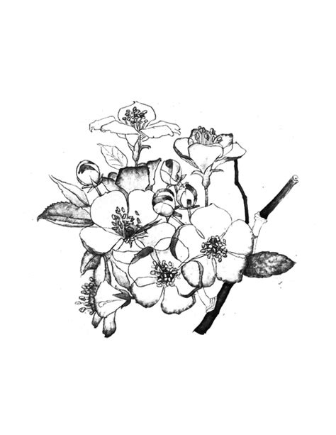 geranium tattoo designs 46 geranium tattoos designs and ideas