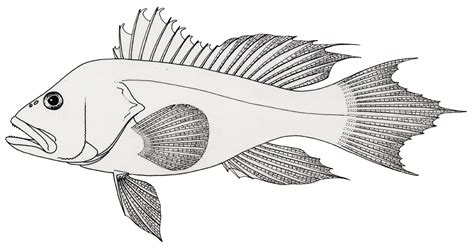 coloring pages of saltwater fish saltwater fish coloring pages ebcs aa5aff2d70e3