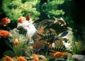 aquarium decoration aquarium fish fish