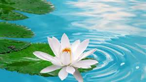 Lotus In The Water White Lotus Rebellion Global Issues On Terrorism
