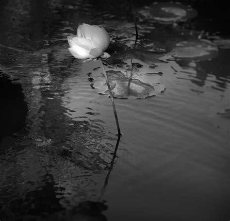 imagenes artisticas que producen desagrado viajes y emociones en blanco y negro fotograf 237 as de
