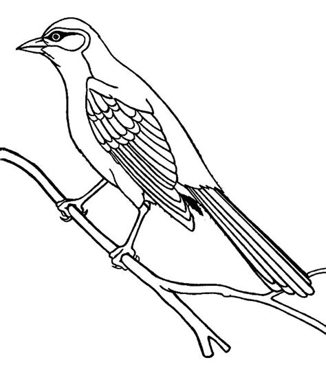 Free Coloring Pages Of Northern Mocking Bird Mockingbird Coloring Page