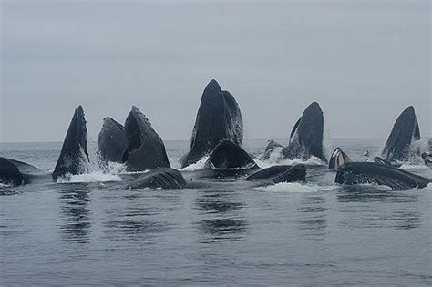 central oregon coast study could impact endangered whale
