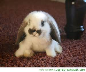 Cute fluffy baby bunnies images amp pictures becuo