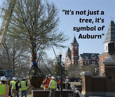 auburn fans in bushes 426 best war eagle auburn football images on