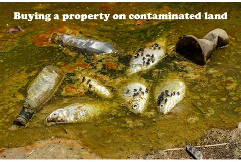 what you need to do to buy a house buying a property on contaminated land