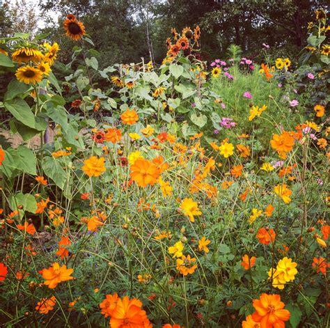 Paristomaine 187 Fall Garden Flowers In Maine Autumn Garden Flowers