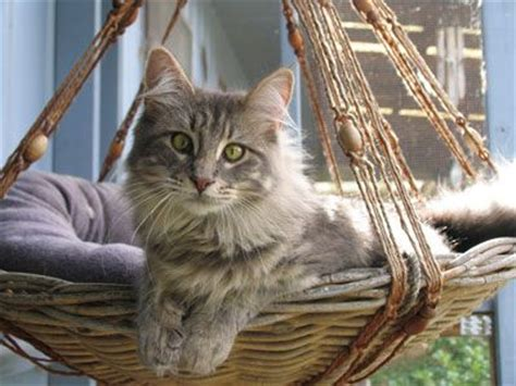 17 Best Ideas About Cat Hammock On Pinterest Diy Cat Toys Cat Things And Diy Cat Tree
